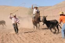Localidad de Condoriaco vivirá su tercera versión del tradicional Rodeo de Burros