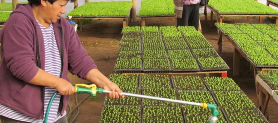 Campesinas de Elqui reciben incentivos para proyectos de emprendimiento rural