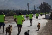 A Viña del Mar y Calama se fueron los primeros lugares de la Media Maratón Valle de Elqui