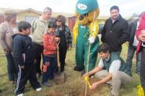 Conaf cumple 93,9% de la meta 2012 de Programa de Arborización Urbana