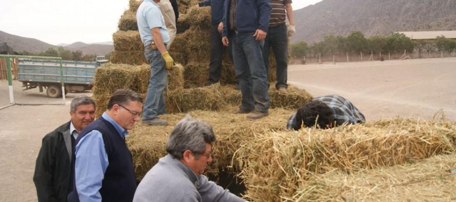 Crianceros de Vicuña reciben ayuda para sus animales para paliar problemas de la sequía