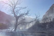 Incendio en Paihuano deja con pérdidas a 9 pequeños agricultores y dos fundos