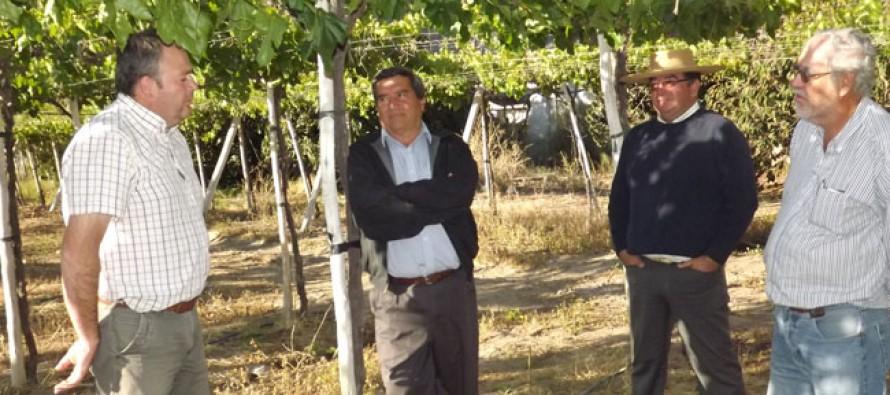 Venta de campos es la única salida viable que ven los empresarios agrícolas en el Elqui