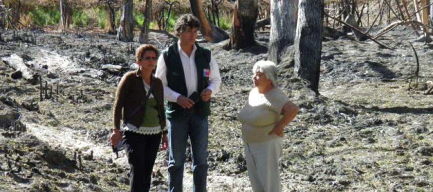 Sectores afectados por incendios en Paihuano serán reforestados por Conaf