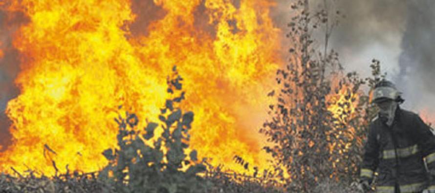 Más de ocho hectáreas se destruyeron con voraz incendio a la entrada del valle de Elqui