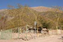 Acacias en La Campana