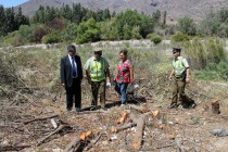 Consternación causa tala indiscriminada de más de 100 árboles en localidad de El Molle