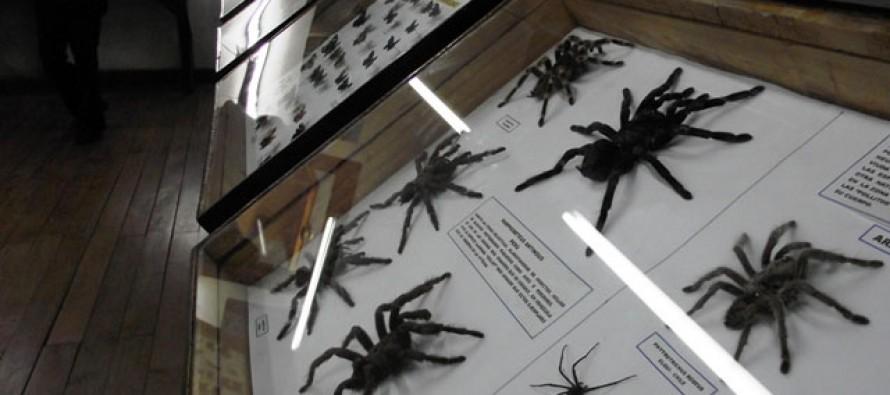 Director de Museo Entomológico asegura que nunca ha pensado cerrar ni irse de Vicuña