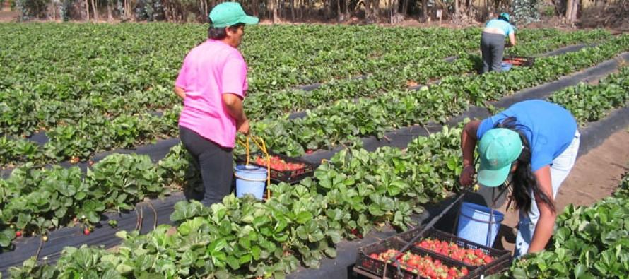 Fedefruta y Sociedad Agrícola del Norte realizarán inédito seminario en Vicuña
