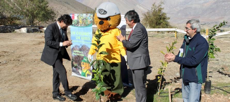 Con más de mil árboles reforestan el Observatorio Cerro Mamalluca