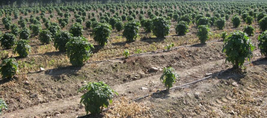 CNR beneficia a más de 1.900 agricultores en primer semestre de 2013 en el marco del Plan Sequía