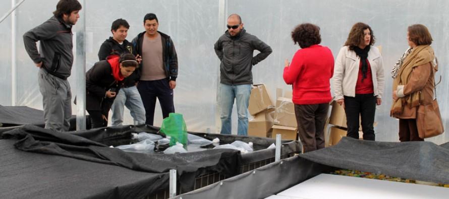 Comienzan primera siembra regional de camarón de rio en granja de Diaguitas