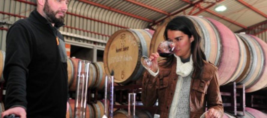 Con uva del valle del Elqui se producen dos nuevas variedades de vino en Elqui Wine