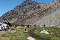 Ministro del Medio Ambiente oficializa declaración de nuevo Santuario de la Naturaleza en Estero Derecho
