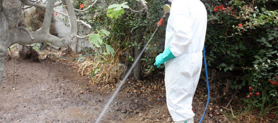 SAG instala más de 600 trampas para control de mosca de la fruta en La Serena