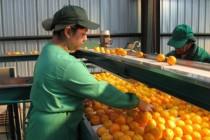 SAN invita a fruticultores de Elqui a Seminario del Nodo de Competitividad y Reconversión