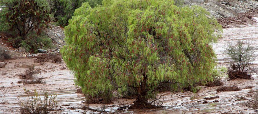 Entregan recomendaciones para evitar daños posteriores en cultivos tras el frente de mal tiempo