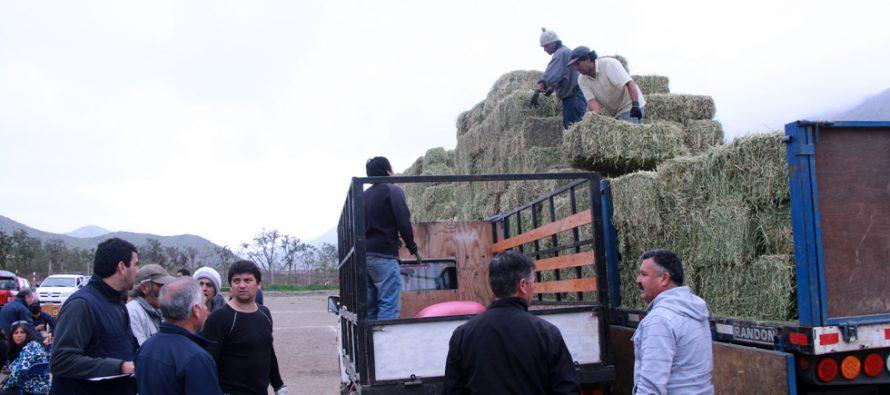Un total de 157 crianceros de Vicuña reciben forraje para sus animales