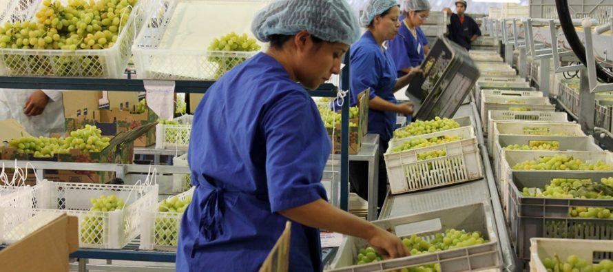 SAG  conoce avances en Systems Approach generado por ASOEX para la exportación de uvas