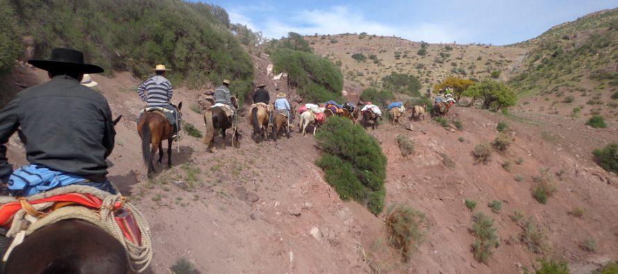 Huasos de Peralillo y Lourdes rememoran antigua ruta utilizada hacia la Fiesta de Andocollo