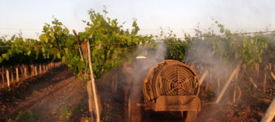 LLaman a los productores a tomar precauciones por lluvia para evitar daño en los frutales