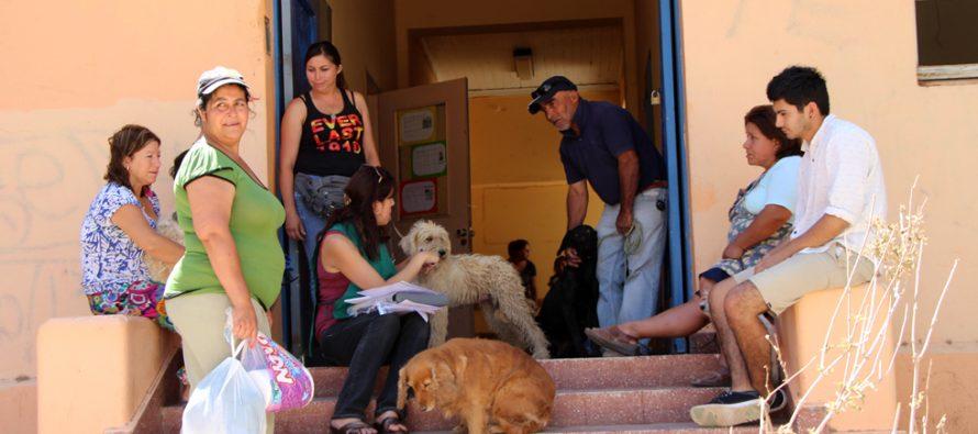 Oficina Municipal de Medio Ambiente realizará un censo canino y felino en Vicuña