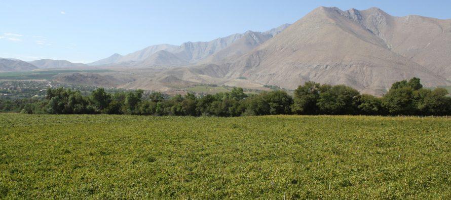 Temporal deja graves daños en la agricultura en el sector alto de la comuna de Paihuano