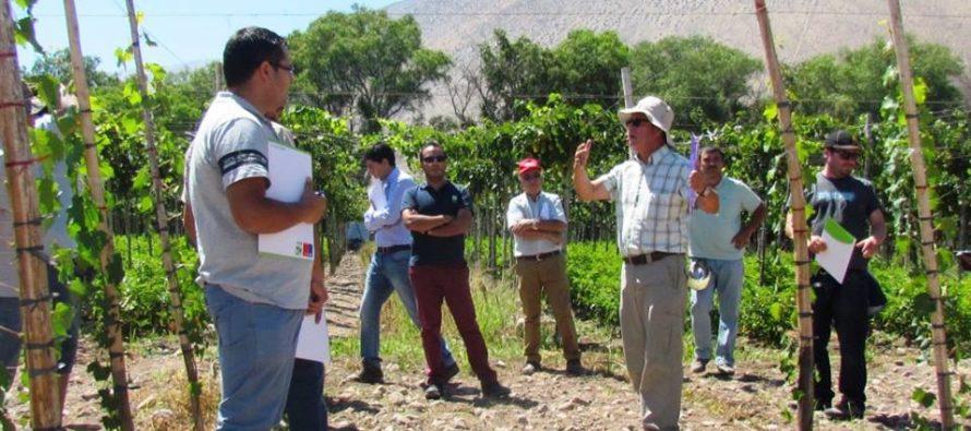 Equipos técnicos del INDAP son capacitados por especialistas del INIA en vid pisquera