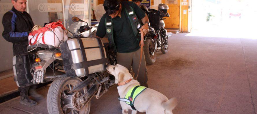 SAG apoya su labor en control fronterizo de Agua Negra con brigada canina