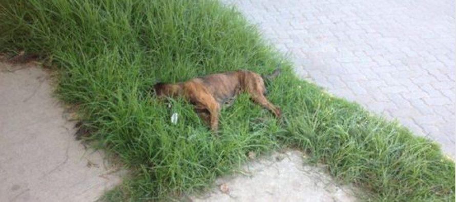 Matanza de perros callejeros tiene consternados a los vecinos de la localidad de El Molle