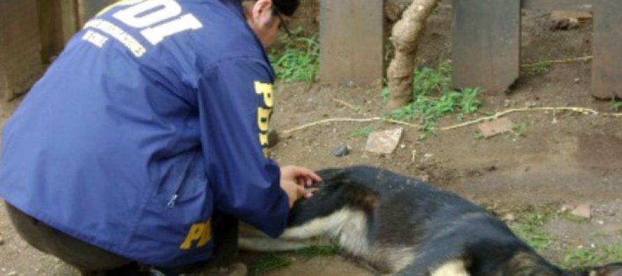 PDI investiga denuncia por maltrato animal en El Molle