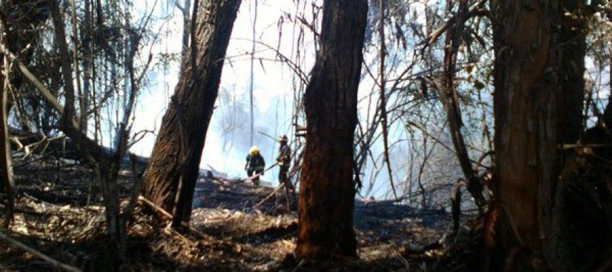 Gobernación de Elqui envió para analizar intervención con involucrados en incendios forestales