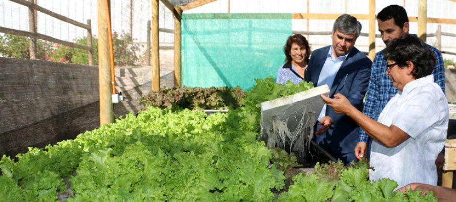 Mujeres elquinas presentan su proyecto de producción hidropónicas a la comunidad