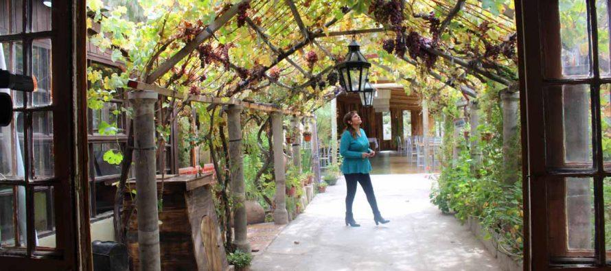"""""""La Buena Cepa"""": Vicuña cuenta con nuevo lugar de eventos que contribuye al desarrollo turístico"""