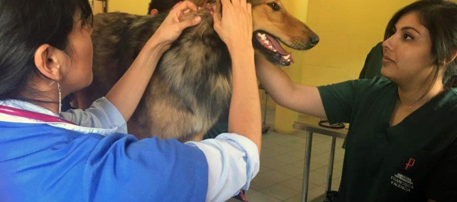 Desarrollan operativo gratuito de vacunación y desparasitación canina en Marquesa