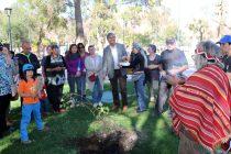 Artesanos retribuyen hospitalidad de la plaza de Vicuña con plantación de árboles sagrados