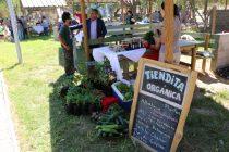 Invitan a la III versión de la Feria Rural Campesina de Vicuña para este fin de semana