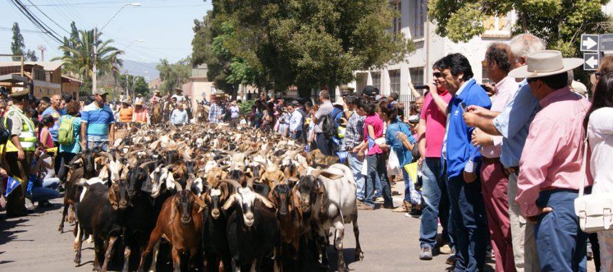 Veranadas: CORE aprueba recursos para desparasitar 75 mil cabezas de ganado trashumante