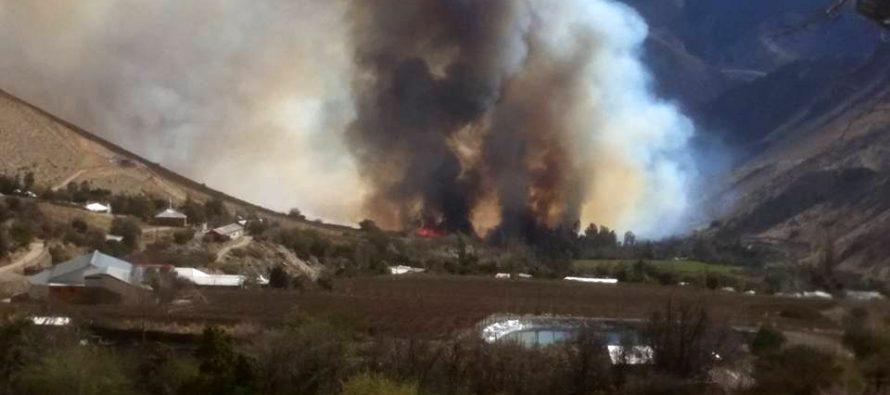 Incendio de sector de La Viñita en la Quebrada de Paihuano quemó más de 40 hectáreas