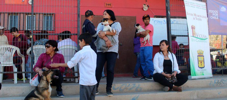 2000 mascotas de Vicuña serán esterilizadas gratuitamente en tres meses
