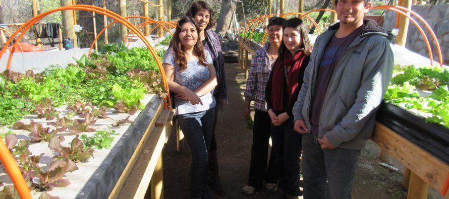 Hidroponía: Mujeres emprendedoras de Vicuña innovan en diferentes técnicas para cultivos de hortalizas