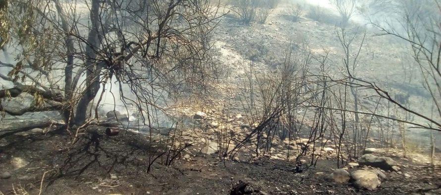 Diputado Walker pide más recursos para combate de Incendios Forestales y para pequeños productores campesinos del Secano