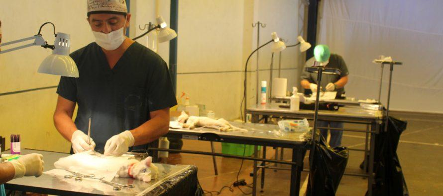 Más de 200 mascotas fueron esterilizadas en un nuevo operativo en la comuna de Vicuña