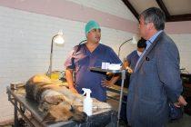Medio centenar de mascotas fueron intervenidas en un nuevo operativo de esterilización en Vicuña
