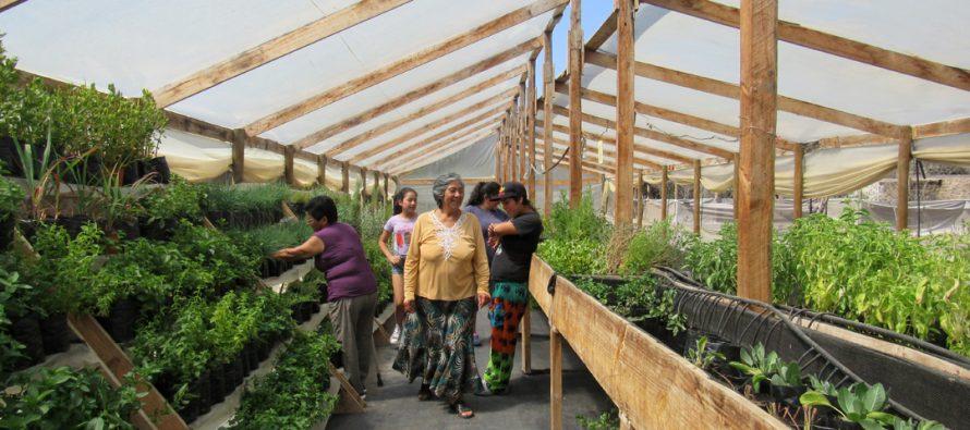 Esencias del Valle: Un ejemplo de asociatividad y perseverancia en Algarrobito