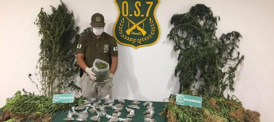 Robo de animales dejó al descubierto cultivo de marihuana en Lourdes