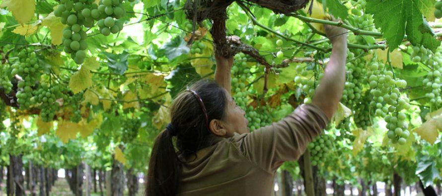 Agricultura destaca como generador de empleo regional en último trimestre según informe de INE