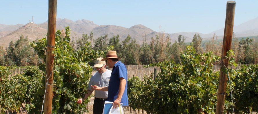 Trabajo desarrollado por INIA en diversas variedades de uva es destacado por experto estadunidense