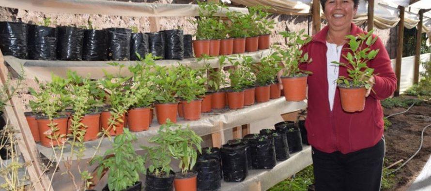 Plantas medicinales: la nueva apuesta de una productora de Algarrobito