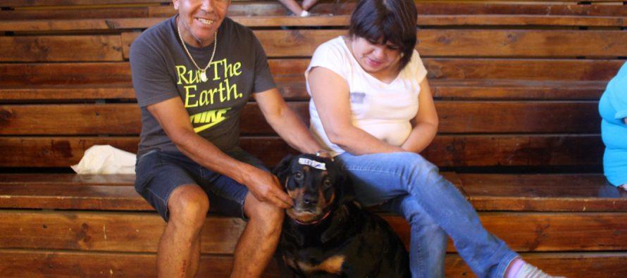 Invitan a participar de operativo masivo de esterilización canina y felina en Vicuña